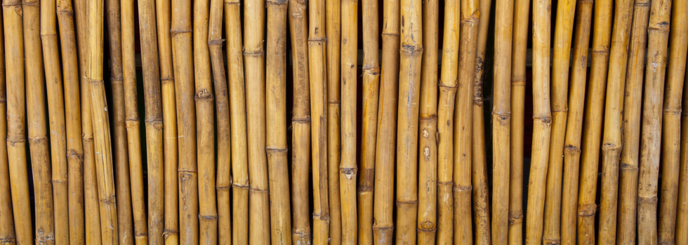 Bamboo fencing 2